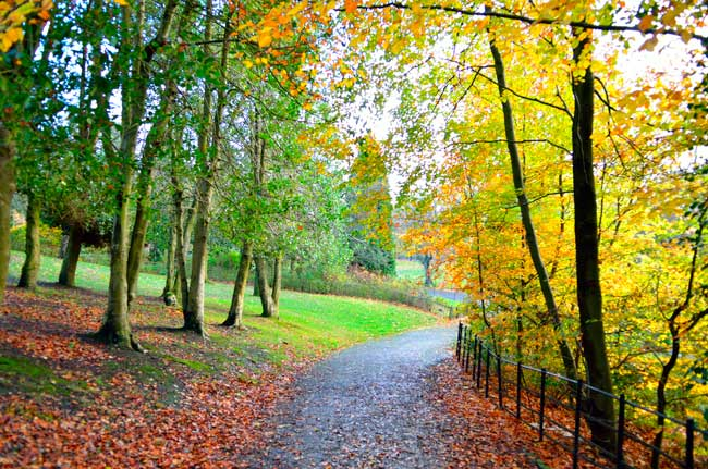 Glasgow has beautiful parks full of nature where you can enjoy of relaxing walks.